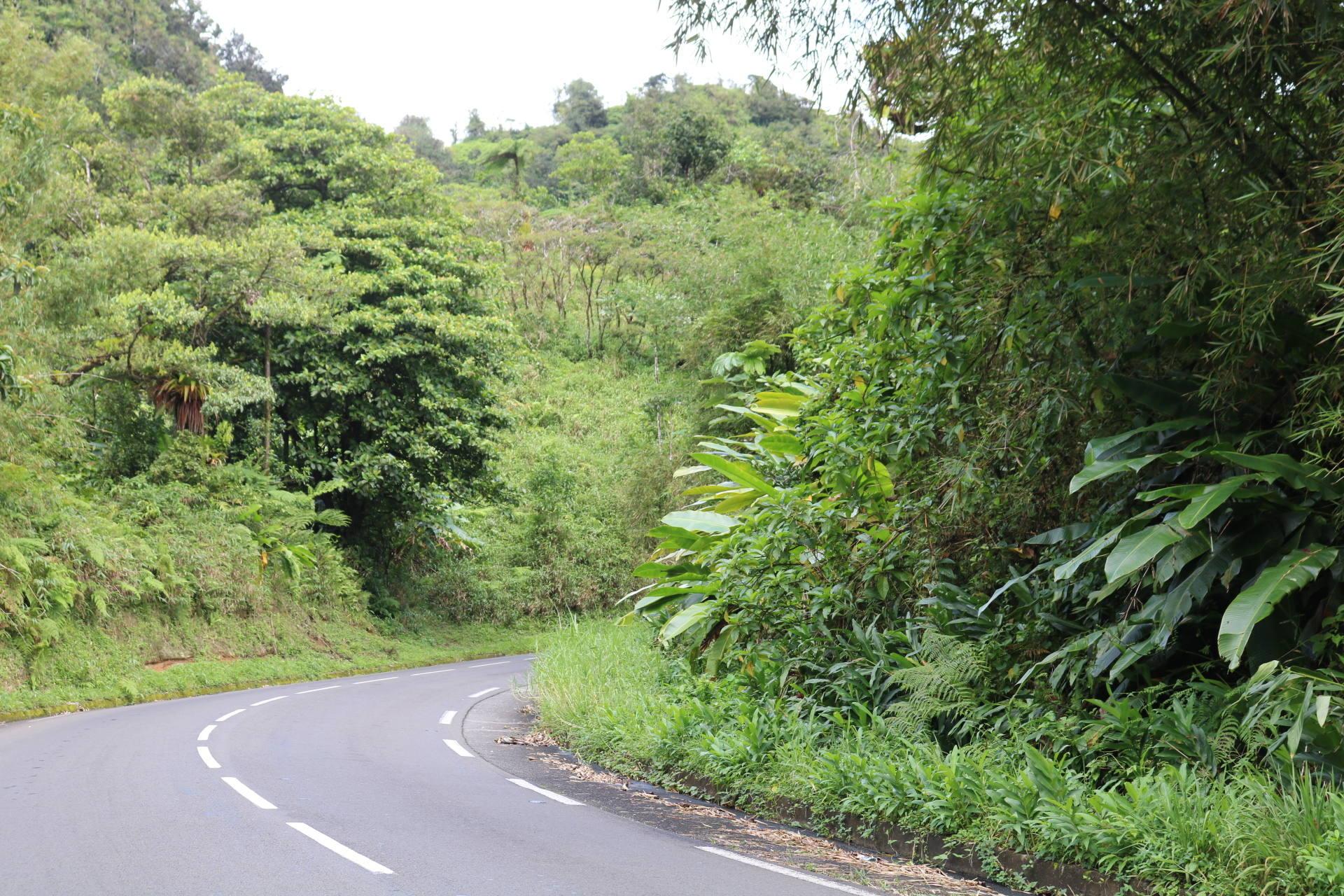 route de la trace Martinique