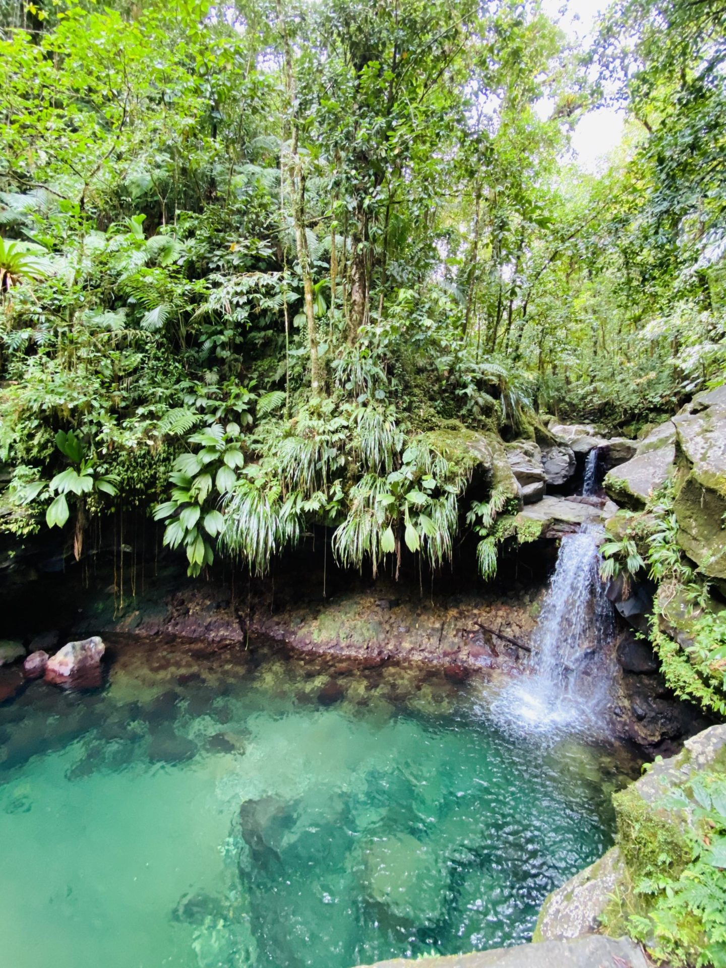 bassin-paradise-guadeoupe-2